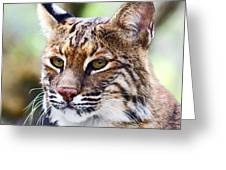 Bob Cat Pose Greeting Card