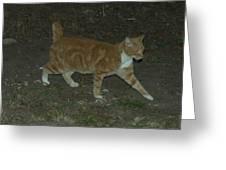 Bob-tail Cat Greeting Card