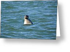 Bobbing In The Water Greeting Card