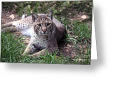 Bobcat 17 Greeting Card