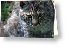 Bobcat 20 Greeting Card