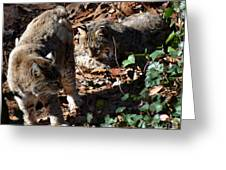 Bobcat Couple Greeting Card