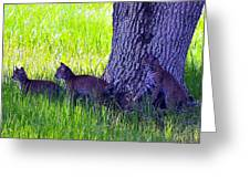 Bobcat Cubs Greeting Card
