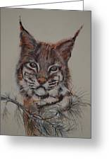 Bobcat Greeting Card by Dorothy Campbell Therrien