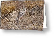 Bobcat In Brush Greeting Card