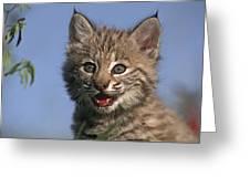Bobcat Kitten Greeting Card