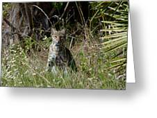 Bobcat On The Prowl Greeting Card