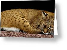 Bobcat Greeting Card by Rose Santuci-Sofranko