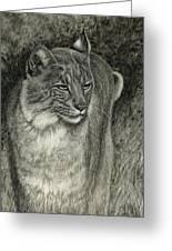 Bobcat Emerging Greeting Card