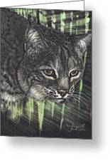 Bobcat Watching Greeting Card