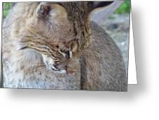 Bobcat2 Greeting Card by Jennifer  King