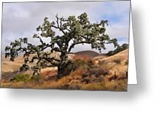 Bobcats Tree Greeting Card