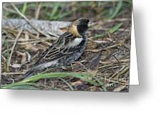 Bobolink Feeding Greeting Card