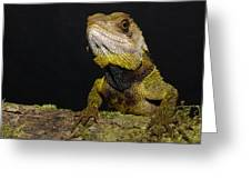 Bocourts Dwarf Iguana Choco Rainforest Greeting Card