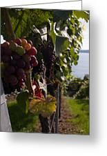 Bodensee Vineyards Greeting Card