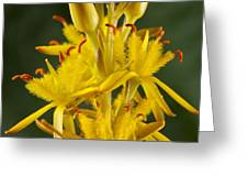 Bog Asphodel (narthecium Ossifragum) Greeting Card
