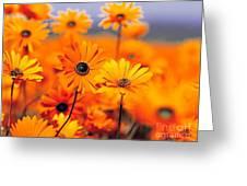 Bogaaala Greeting Card