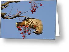 Bohemian Waxwing Eating Rowan Berries Greeting Card