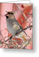 Bohemian Waxwing Greeting Card