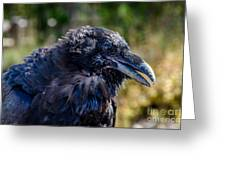 Bold And Demanding Raven Greeting Card