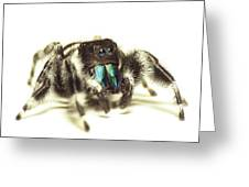 Bold Jumping Spider Greeting Card