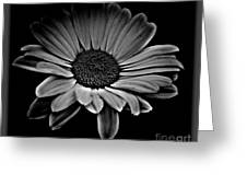 Bold Monochrome Daisy Greeting Card