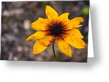 Bold Yellow Flower Greeting Card by Jason Brow