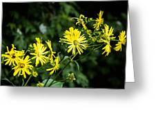 Bold Yellow Flowers Greeting Card by Jason Brow