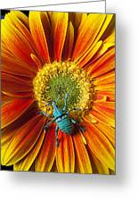 Boll Weevil On Mum Greeting Card by Garry Gay