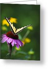 Bon Voyage Butterfly Greeting Card