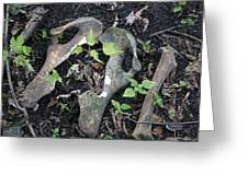Bones On The Forest Floor Greeting Card