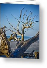 Boneyard Beach 3 Greeting Card