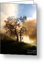 Bonfire And Olive Tree Greeting Card