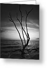 Bonita Beach Tree Black And White Greeting Card