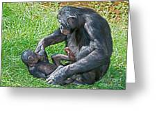 Bonobo Adult Playing With Baby Greeting Card