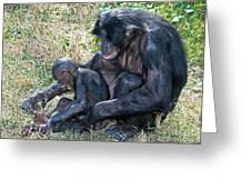 Bonobo Adult Tickeling Juvenile Greeting Card