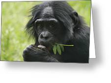 Bonobo Eating Greeting Card