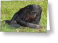 Bonobo Greeting Card