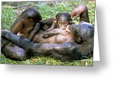 Bonobos Greeting Card