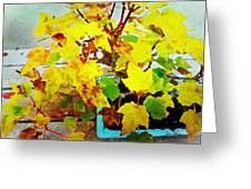 Bonsai Tree With Yellow Leaves Greeting Card