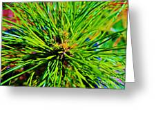 Bonzi Pine Greeting Card