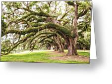 Boones Oaks Greeting Card