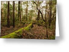 Boranup Forest - Western Australia Greeting Card