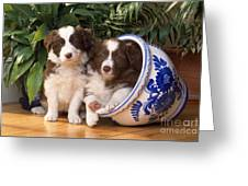 Border Collie Puppies In Plant Pot Greeting Card