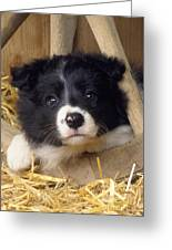 Border Collie Puppy And Wooden Wheel Greeting Card