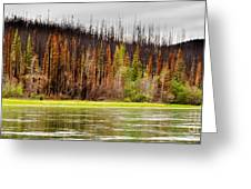 Boreal Forest At Yukon River Destroyed By Fire Greeting Card