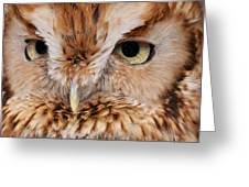 Boreal Owl Eyes  Greeting Card