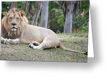 Bored Lion Greeting Card