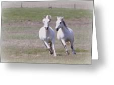 Lipizzaner Stallions Greeting Card