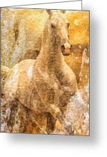 Born To Be Free Greeting Card